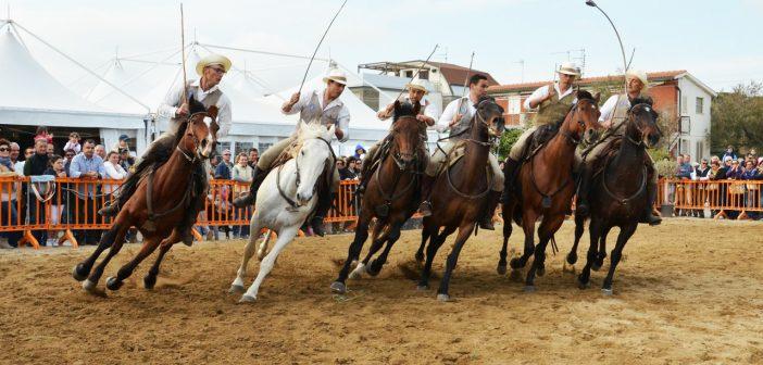 """  25,26 SETTEMBRE 2021   CANINO – Tutto pronto per la """"Mostra Nazionale del Cavallo Maremmano""""!"""