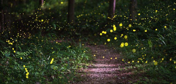 | 23 GIUGNO 2021 | BLERA – Con Antico Presente scopriamo le lucciole e la magia della notte delle streghe