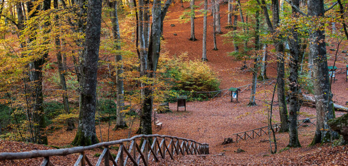   1 NOVEMBRE 2020   RONCIGLIONE – Vino, caldarroste e trekking al Lago di Vico